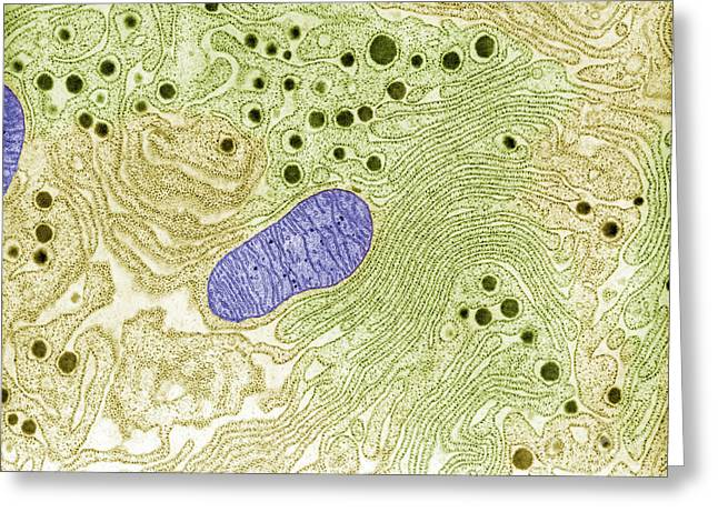 Endoplasmic Reticulum Greeting Card by Omikron