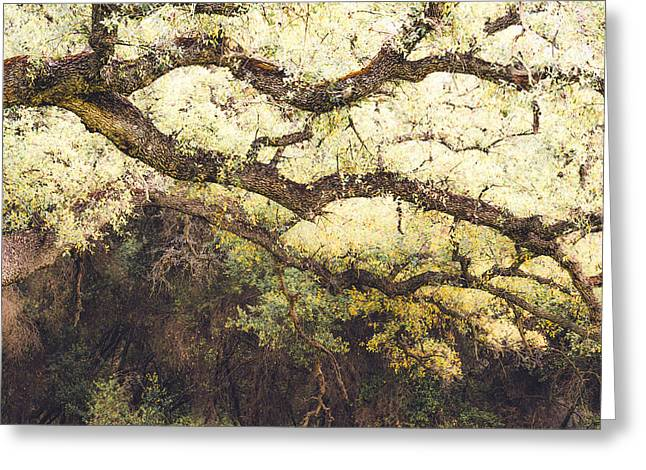 March 2012 Greeting Cards - Engelmann Oak Branches Greeting Card by Alexander Kunz