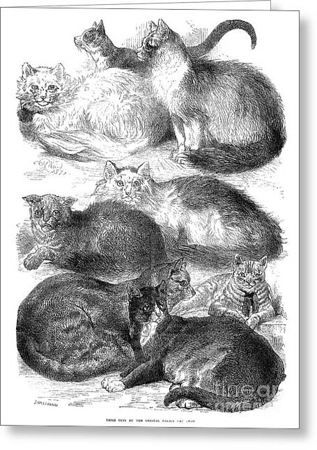 Cats Show Greeting Cards - England: Cat Show, 1871 Greeting Card by Granger