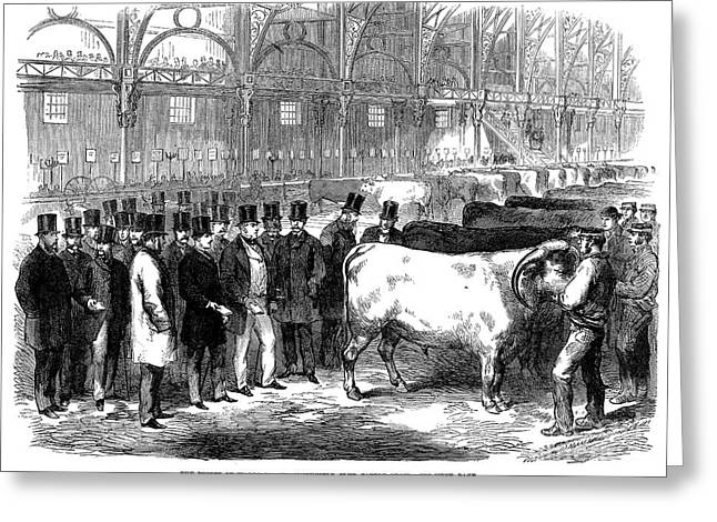 Wal Greeting Cards - England: Cattle Show, 1863 Greeting Card by Granger