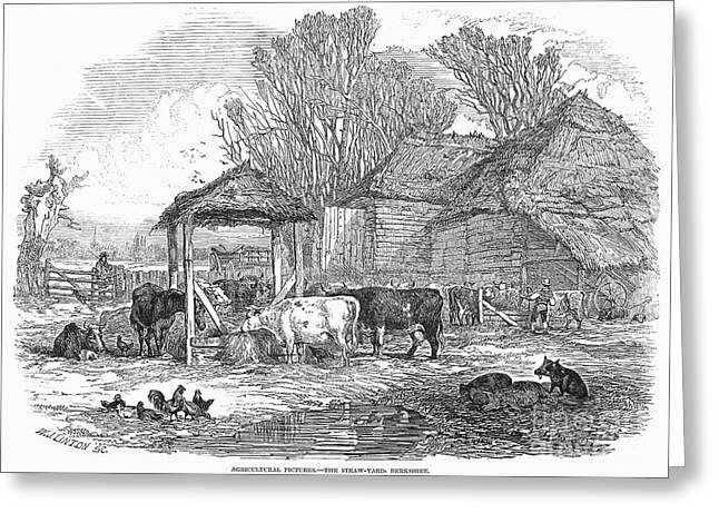 Barn Yard Greeting Cards - England: Farm Yard, 1846 Greeting Card by Granger