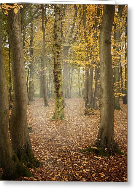 Haunted Woods Greeting Cards - English Forest in Autumn Greeting Card by Ethiriel  Photography