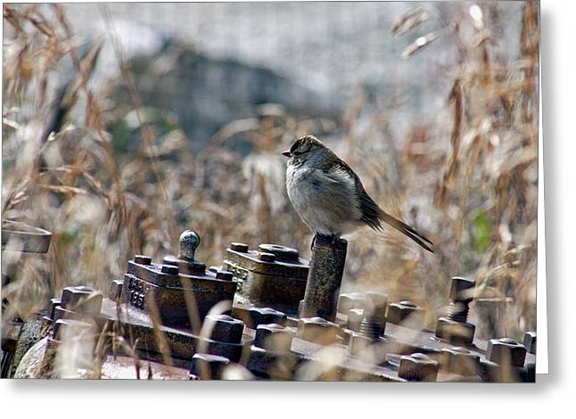 Sparrow Greeting Cards - Enjoying My Self Greeting Card by James Steele