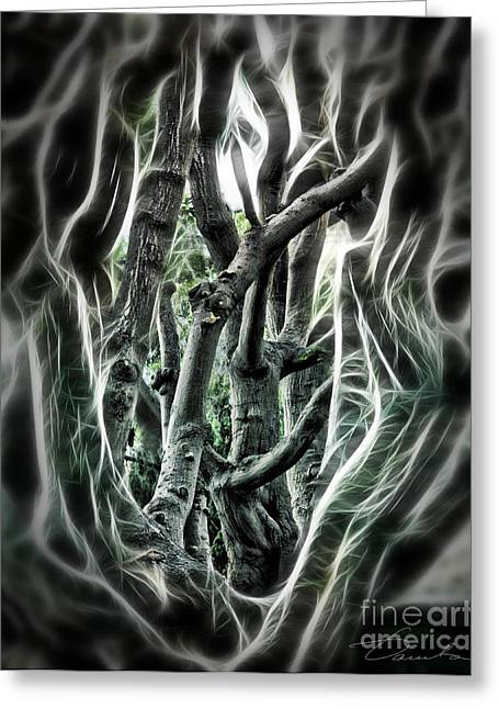 Danuta Bennett Photographs And Art Greeting Cards - Entangled Worlds Greeting Card by Danuta Bennett