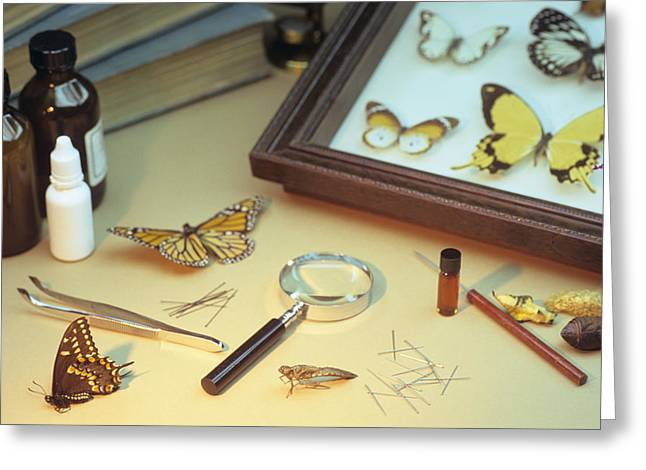 Mounting Greeting Cards - Entomologists Equipment Greeting Card by David Aubrey