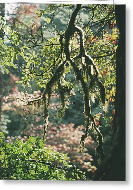 Epiphyte Greeting Cards - Epiphytic Moss Greeting Card by Doug Allan
