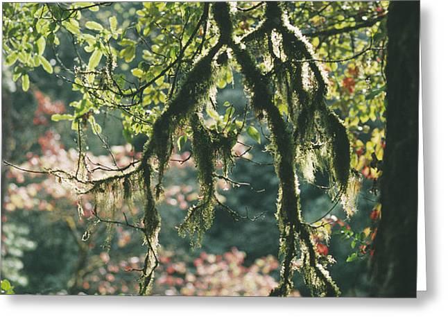 Epiphytic Moss Greeting Card by Doug Allan