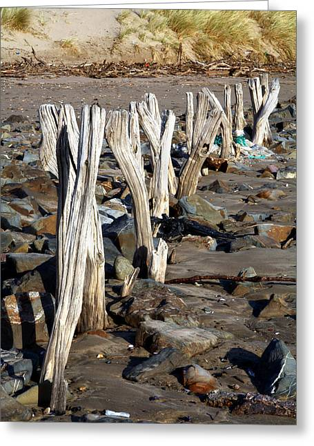 Sand Fences Greeting Cards - Eroded Wooden Fence Greeting Card by Dr Keith Wheeler