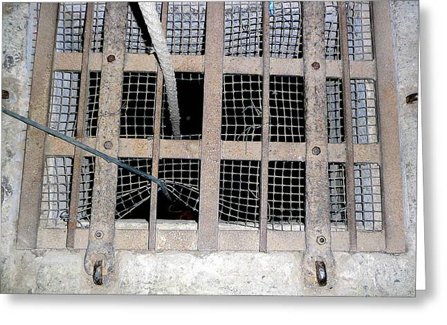 Grate Greeting Cards - Escape Greeting Card by Lori Seaman