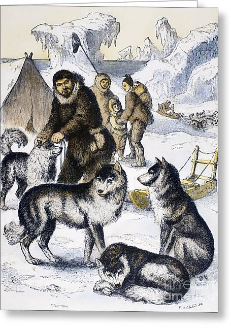 Husky Greeting Cards - Eskimos & Sled Dogs Greeting Card by Granger
