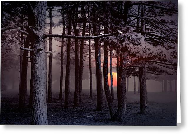 Randy Greeting Cards - Ethereal Forest Greeting Card by Randall Nyhof
