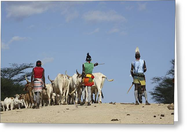 Ethiopia, Hamer Tribe Herding Cattl Greeting Card by Photostock-israel