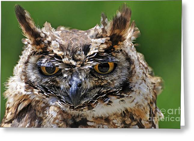 Eurasian Eagle-owl Greeting Card by Sami Sarkis
