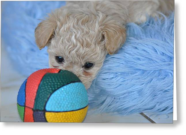 Soccer Framed Prints Greeting Cards - Euro Soccer For Dogs Greeting Card by Lisa  DiFruscio