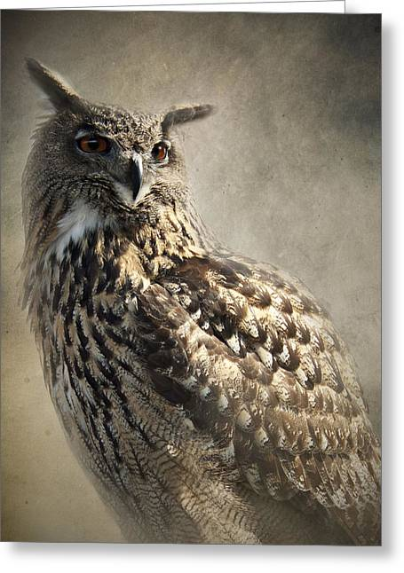 Majestic Falcon Greeting Cards - European Eagle Owl Greeting Card by Ethiriel  Photography
