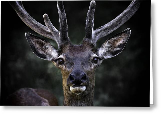 Barry Styles Greeting Cards - European Red Deer 2993 Greeting Card by Barry Styles