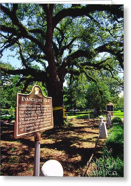 Evangeline St Greeting Cards - Evangeline Oak St Martinville Louisiana Greeting Card by Thomas R Fletcher