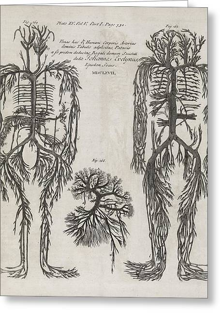 Royal Society Of London Greeting Cards - Evelyn Table Blood Vessels, 17th Century Greeting Card by Middle Temple Library