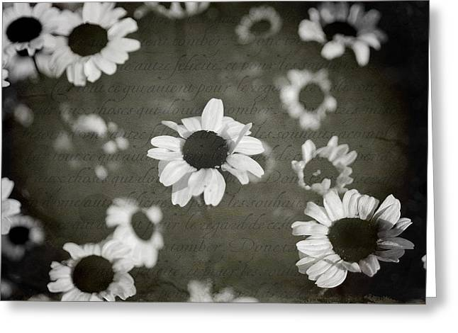 Texture Flower Greeting Cards - Even in Darker Days Greeting Card by Laurie Search