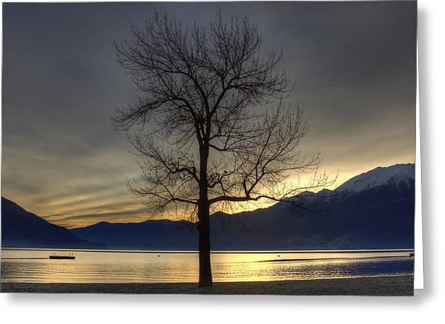 Winter Trees Greeting Cards - evening at the Lake Maggiore Greeting Card by Joana Kruse