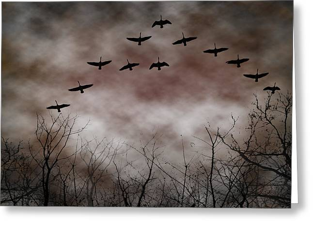 Geese Greeting Cards - Evening Flyover Greeting Card by Kathy Jennings