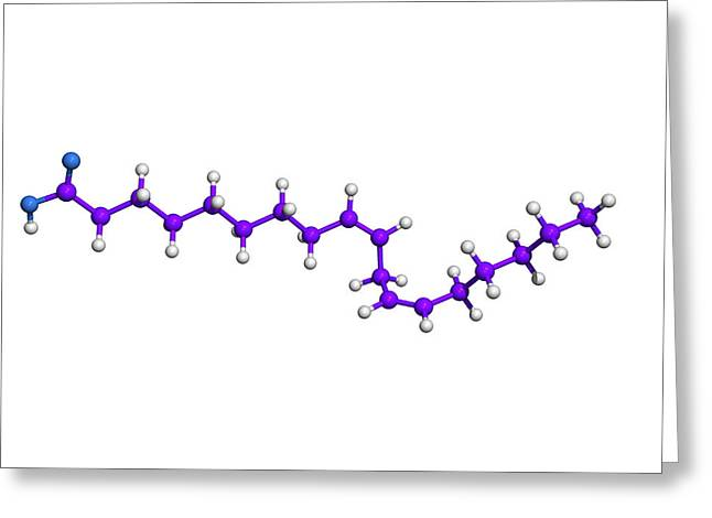 Evening Primrose Greeting Cards - Evening Primrose Oil Molecule Greeting Card by Dr Tim Evans