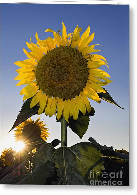 Evening Sun - D008092 Greeting Card by Daniel Dempster