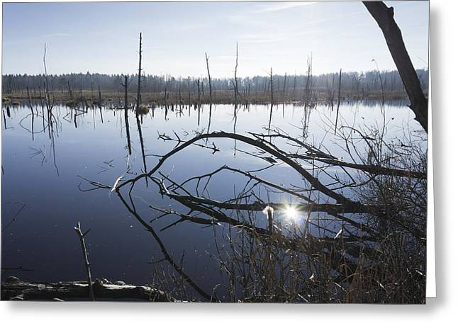 Floodplain Greeting Cards - Everglade Schwenninger Moos Greeting Card by Matthias Hauser