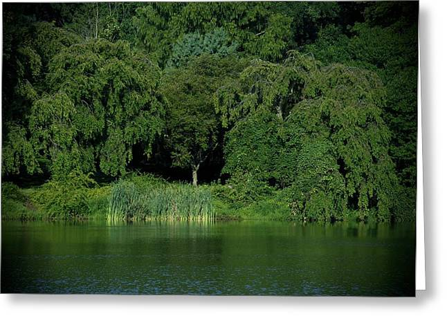 Reflections Of Shadows Greeting Cards - Everywhere and Nowhere - Holmdel Park Greeting Card by Angie Tirado
