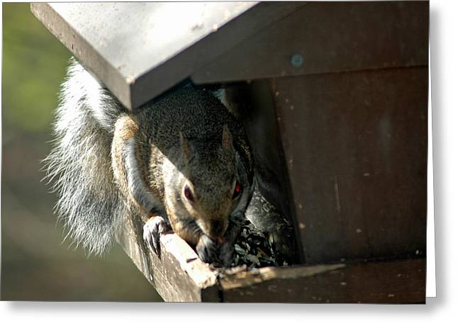 Squirrel Greeting Cards - Evil Rodent Greeting Card by LeeAnn McLaneGoetz McLaneGoetzStudioLLCcom
