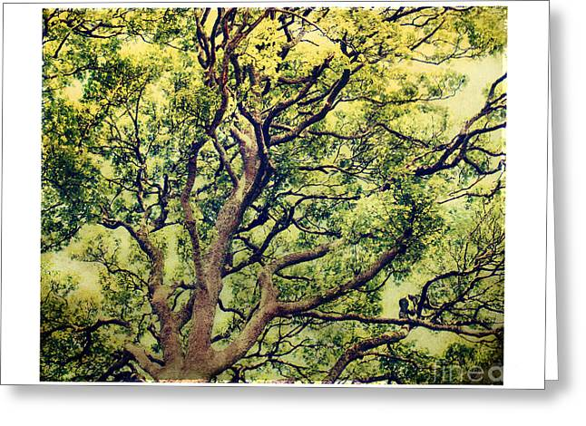 Olive Green Greeting Cards - Exalt Greeting Card by Linde Townsend