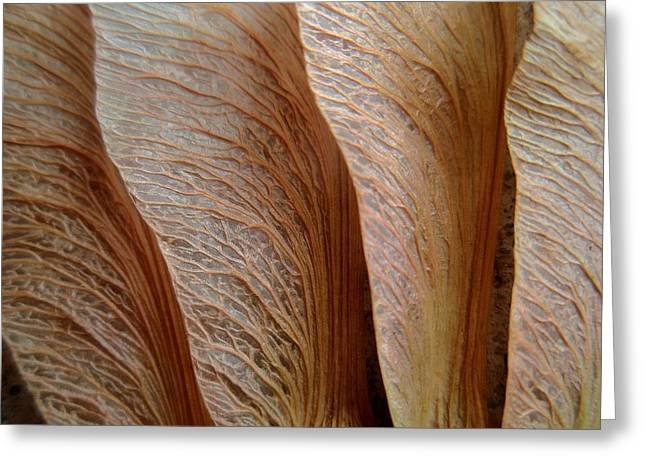 Whirlygig Greeting Cards - Exercise in Texture Greeting Card by Beth Akerman