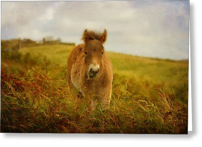Pastureland Greeting Cards - Exmoor Wild Pony Greeting Card by Carla Parris