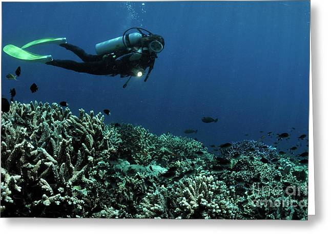 Women Only Greeting Cards - Exploring coral reefs Greeting Card by Sami Sarkis