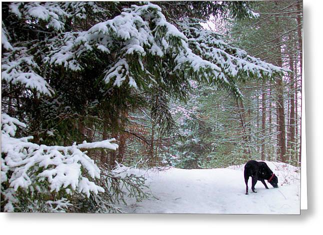Black Labrador Retreiver Greeting Cards - Exploring Labrador Greeting Card by Darlene Bell
