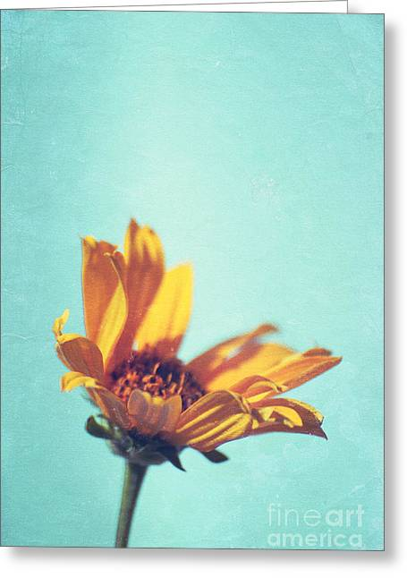 Single Flower Greeting Cards - Expression - s03et01 Greeting Card by Variance Collections