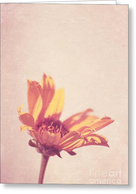 Texture Floral Photographs Greeting Cards - Expression - s07ct01 Greeting Card by Variance Collections