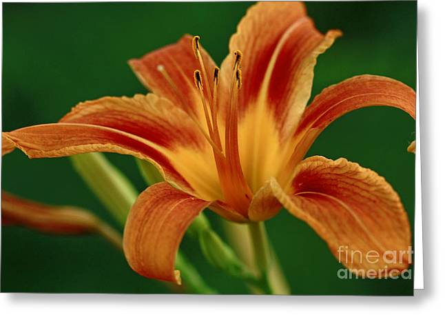 Expression Of Joy Greeting Card by Inspired Nature Photography Fine Art Photography