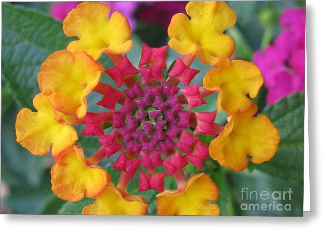 Extraordinary Photography Greeting Card by Tina Marie