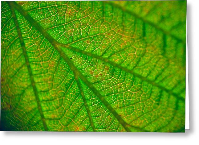 Light Magnifications Greeting Cards - Extreme Close-up Of Leaf Greeting Card by Roman Popov
