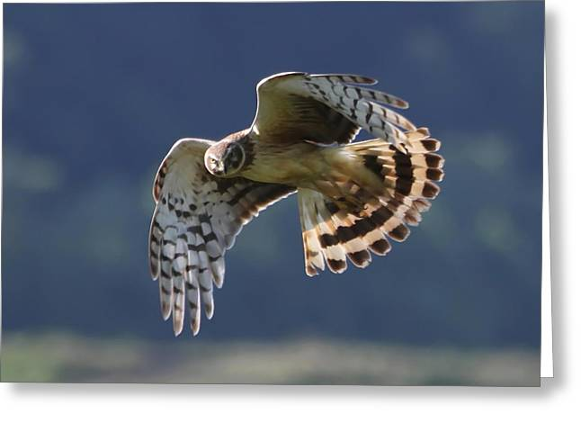 Wildlife Refuge. Greeting Cards - Eye Contact Greeting Card by Angie Vogel