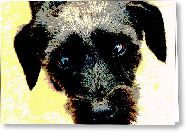 Puppies Mixed Media Greeting Cards - Eye Contact Greeting Card by Dorrie Pelzer