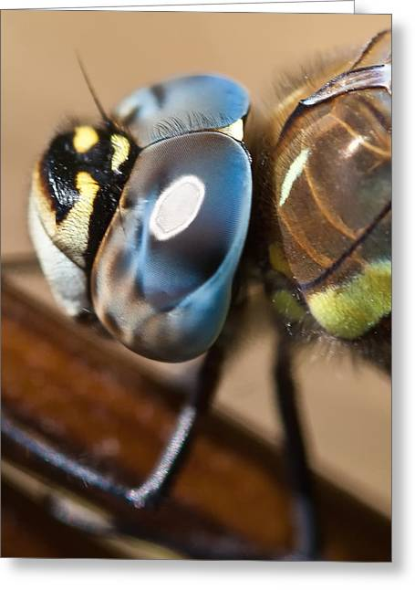 White Wing Greeting Cards - Eye of a Dragonfly  Greeting Card by Gert Lavsen