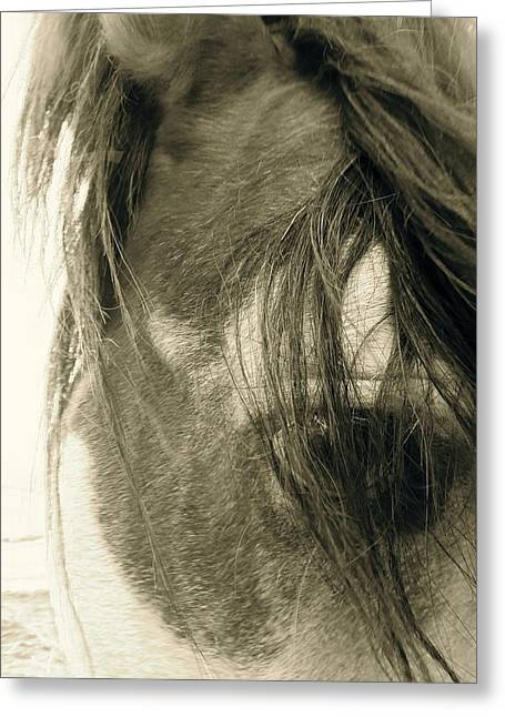 Wild Horse Pyrography Greeting Cards - Eye Of A Mustang Greeting Card by Tess  Marie