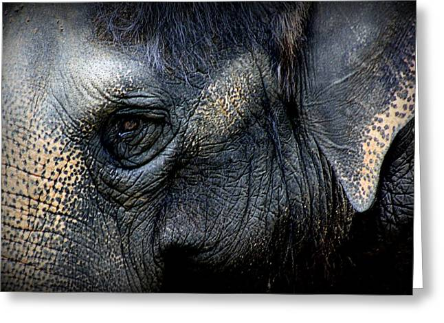 """animal Photographs"" Greeting Cards - Eye of the Elephant Greeting Card by Tam Graff"