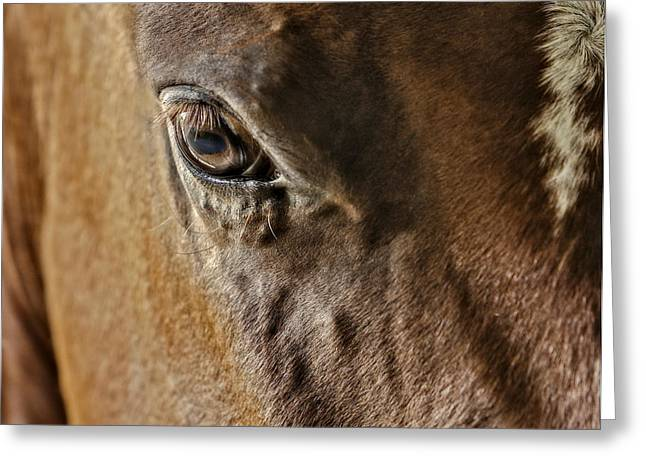 Quarter Horses Greeting Cards - Eye Of The Horse Greeting Card by Susan Candelario