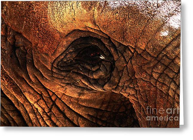 Elephants Eye Greeting Cards - Eyes Through the Canyon of Time Greeting Card by Wingsdomain Art and Photography