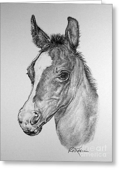 Kaelin Drawings Greeting Cards - Face of a Foal Greeting Card by Roy Kaelin
