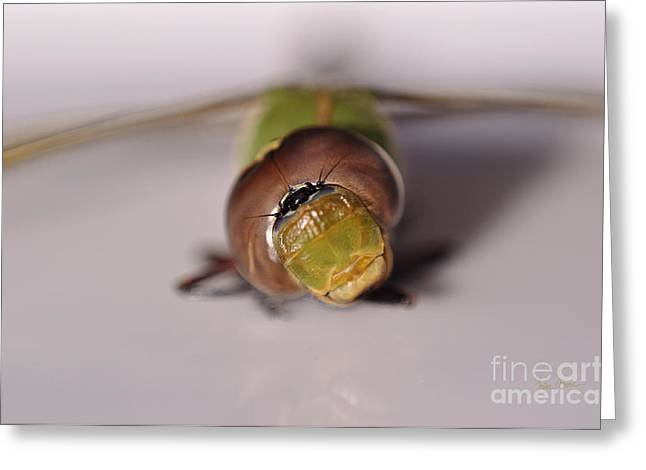Green Darner Dragonflies Greeting Cards - Face to Face Greeting Card by Luke Moore