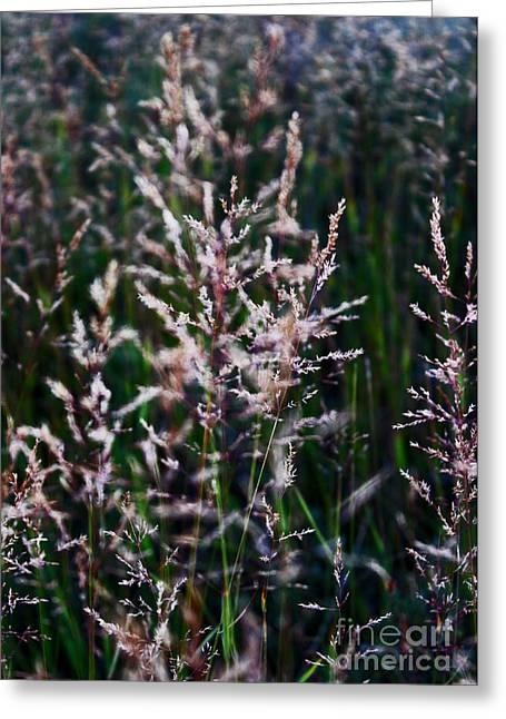Faces In The Field Grass Greeting Card by Wesley Hahn